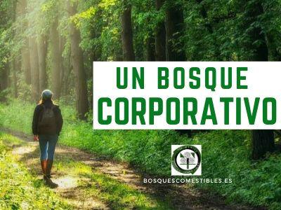 Bosque Corporativo