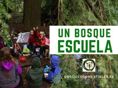 escuela en el bosque