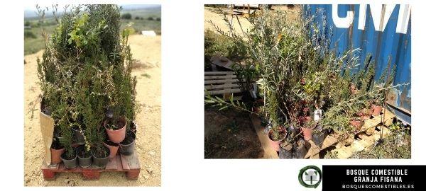 arboles para reforestacion