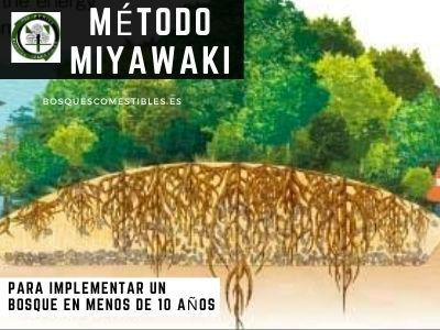 Método Miyawaki para el Bosque de Alimentos