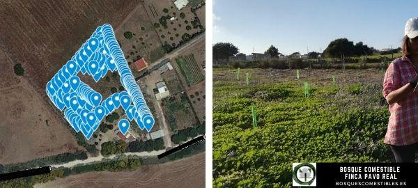 plantar arboles en España