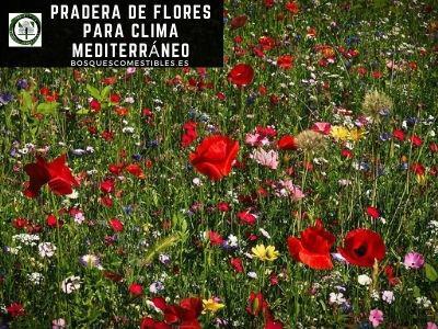 Pradera Flores Clima Mediterráneo
