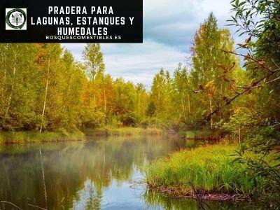 Pradera para Lagunas, Estanques y Humedales