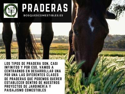 praderas