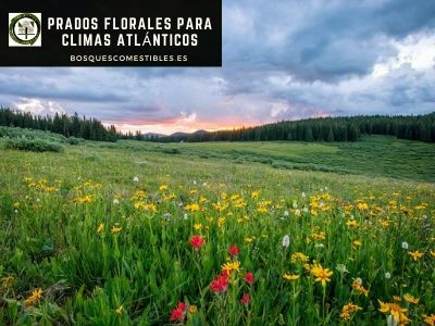 Praderas Florales Climas Atlánticos