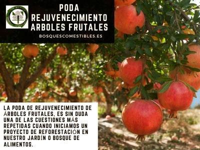 Poda Rejuvenecimiento Arboles Frutales