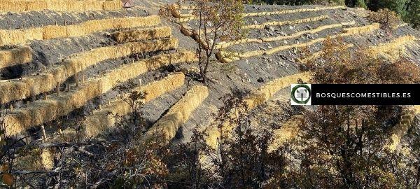 bancales contra la erosión