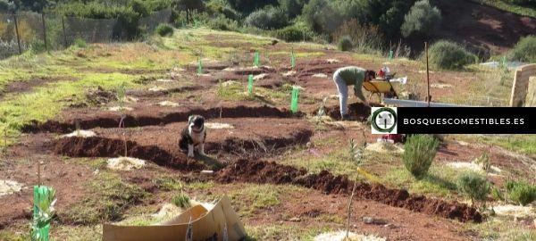 Soluciones para la degradación del suelo