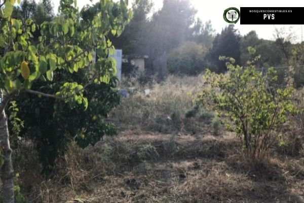 diseño bosque comestible Castellón