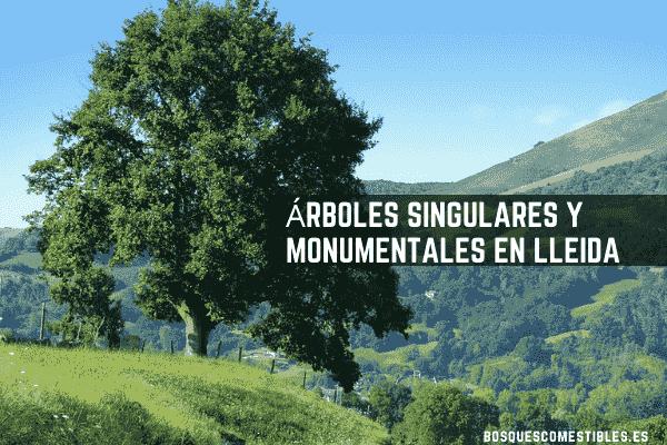 Arboles Lleida