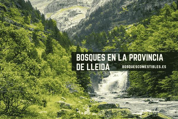 Pirineos, bosques en Lleida