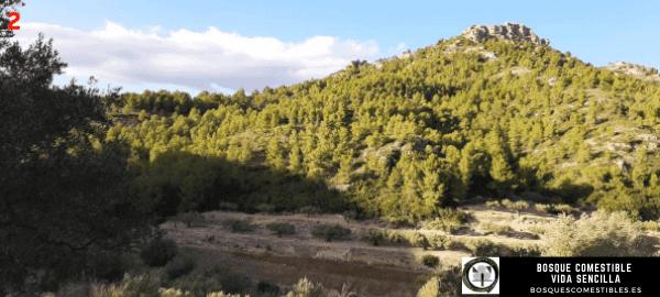 Bosque Comestible en Tarragona, España