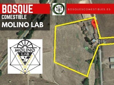 Bosque Comestible Molino Lab